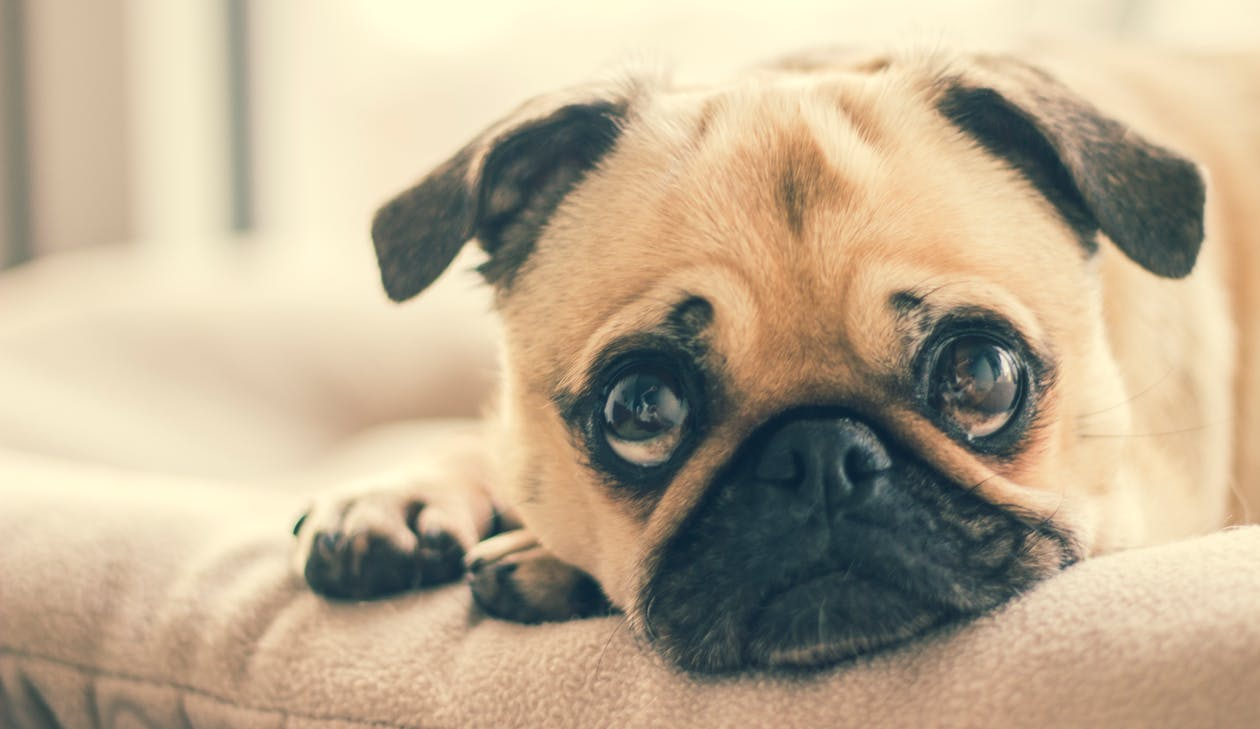 7 Tips For Your Dog's Anxiety on New Year's Eve | | Long Beach